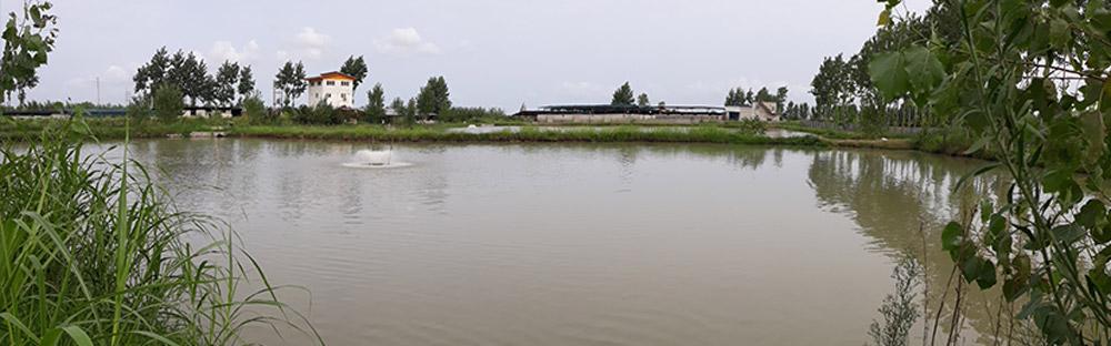 lazir-Hydrothermal-fish-farm