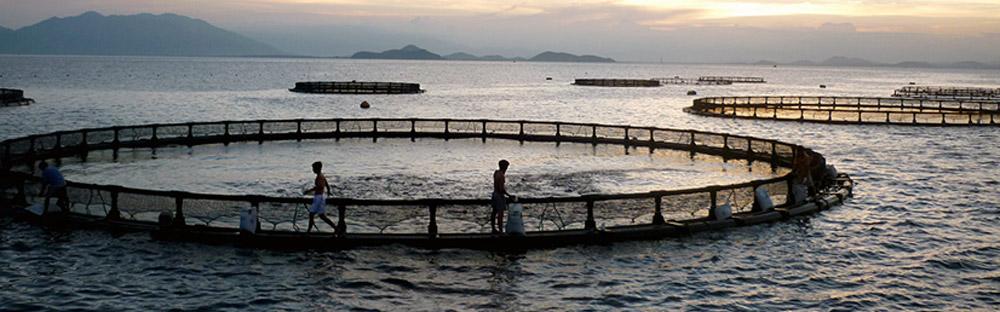 lazir-cage-fish-farm
