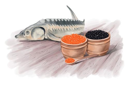 lazir beluga imperial caviar