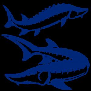 lazir-beluga-caviar-fish-logo-3