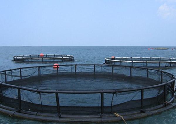lazir-marine-cage-fish farm